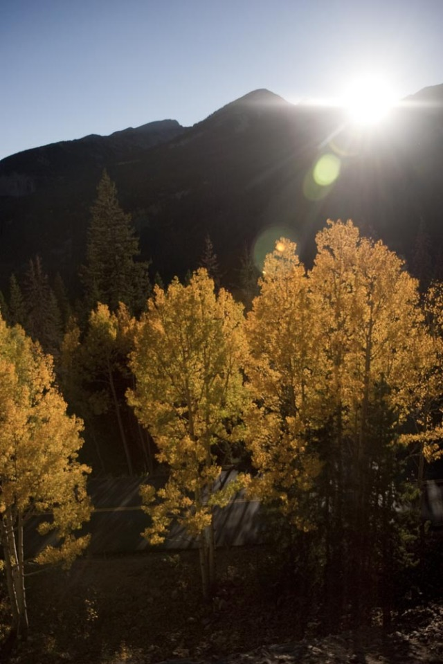 Colorado Aspen Color